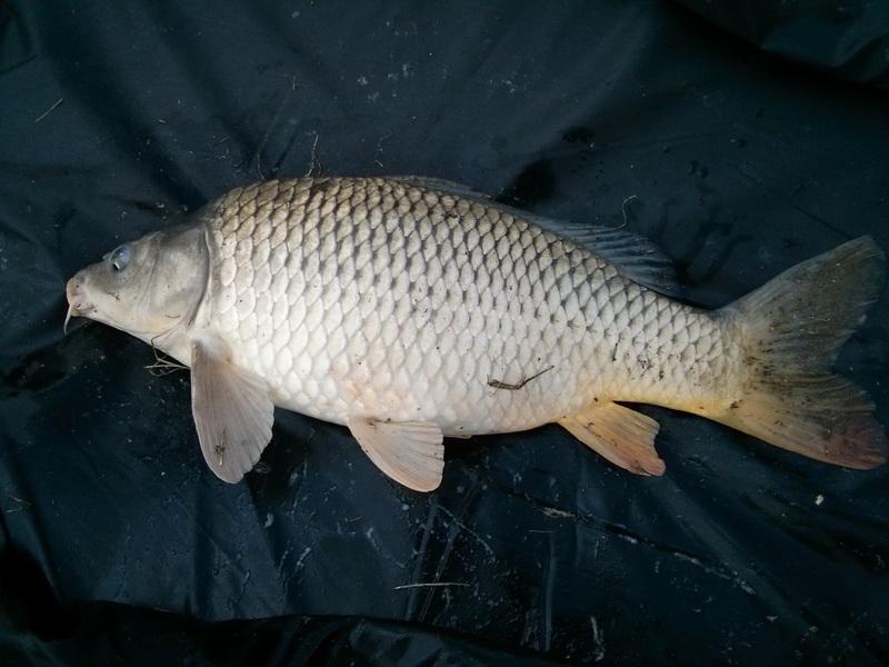 Torony Tó horgásztó Pest megye Vác