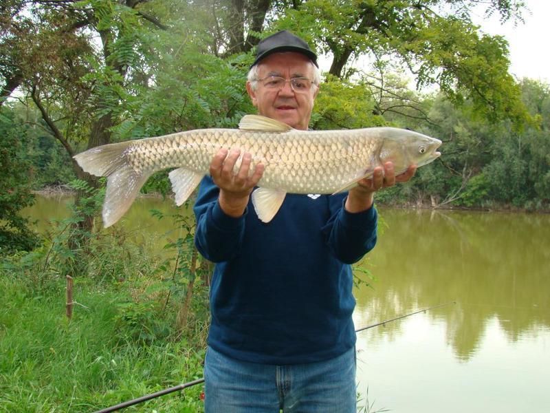 Torony Tó horgásztó Vác